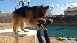 Dog sport - Iro & Cara