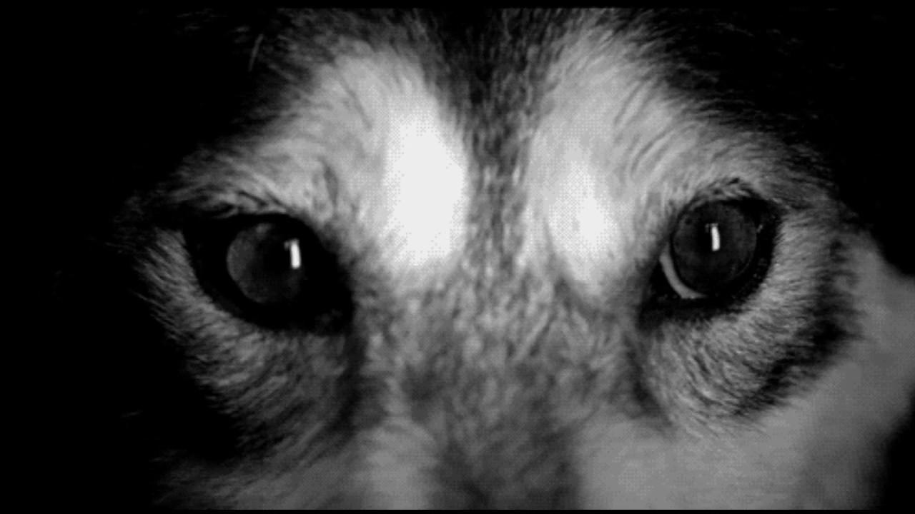 гифка глаза щенка вес, простота укладки