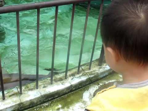 Bill xem sư tử biển tại vườn bách thú UENO tokyo Nhật bản