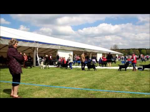 National Dog Show 2017  Labrador Dog Challenge