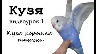 """Учим попугая по имени Кузя говорить. Видеоурок 1: """"Кузя хорошая птичка"""""""