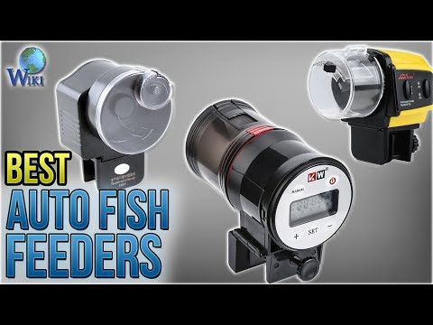 10 Best Auto Fish Feeders 2018