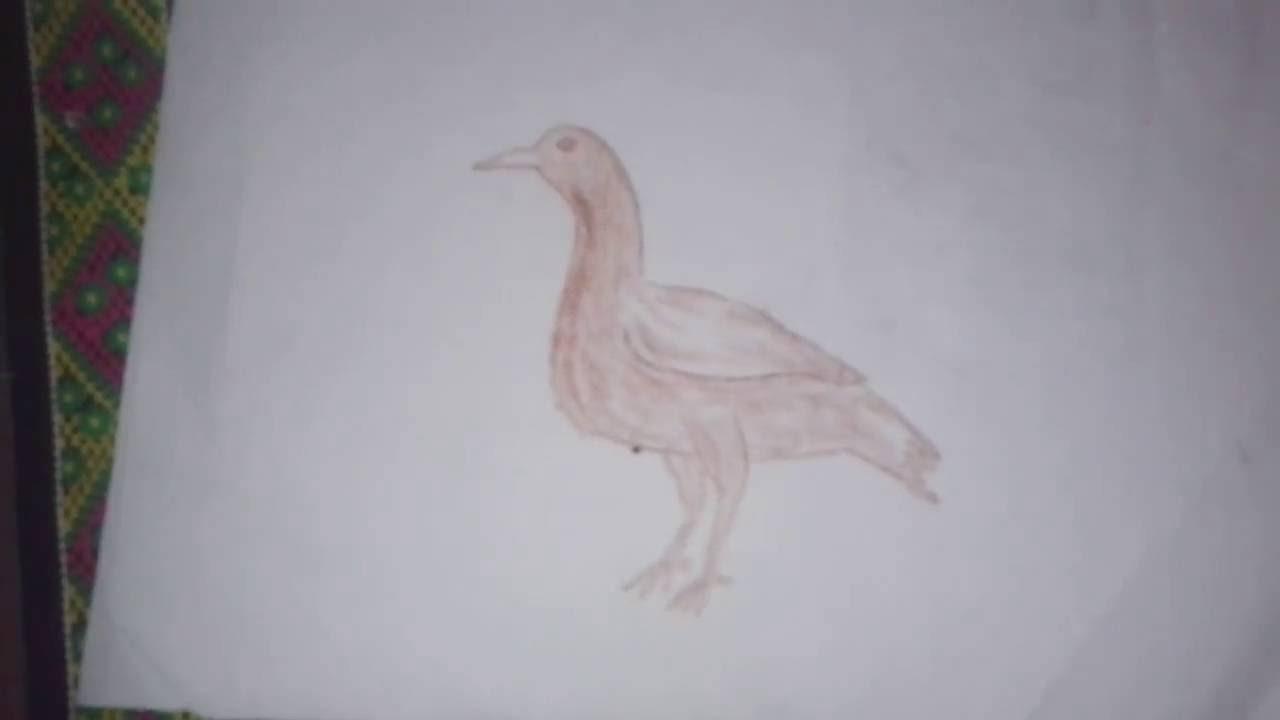 6600 Cara Gambar Hewan Bebek Terbaik