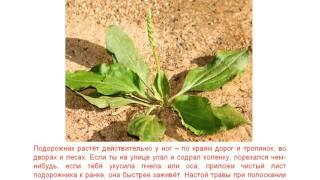 Лекарственные  растения  (детские обучалки)