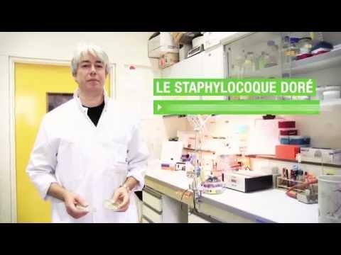 S03-E04-Tarek MSADEK -  Le staphylocoque doré