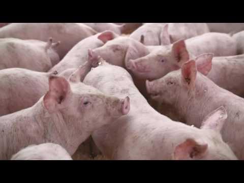 Steve's Livestock Liftdeck Trailer