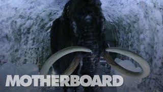 The Mission to Resurrect the Woolly Mammoth thumbnail