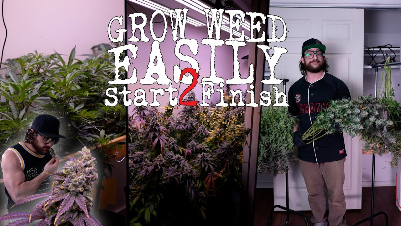 Download THE EASIEST WAY TO GROW ORGANIC WEED (FULL PROCESS EXPLAINED) JUST ADD WATER | CRAZY TRANSFORMATION!
