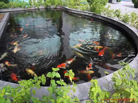 Koi fish garden ponds design ideas youtube for Building a fish pond