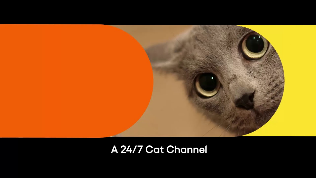 Pluto TV - Drop in for Meow