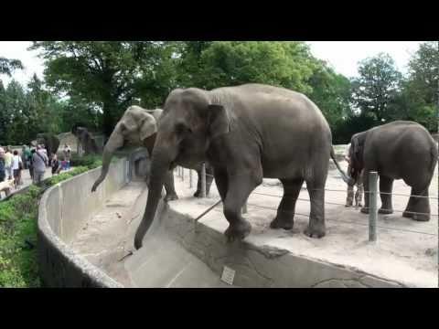 Hagenbecks Tierpark Teil 2/3 Juli 2011