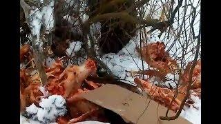 В Курском районе возле школы разбросали останки трупов животных