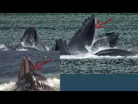 Are whales fish or mammals?