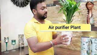 3 Best Indoor Plants Ideas for Living Room & Bedroom  | Money Plant , Air Purifying Plant