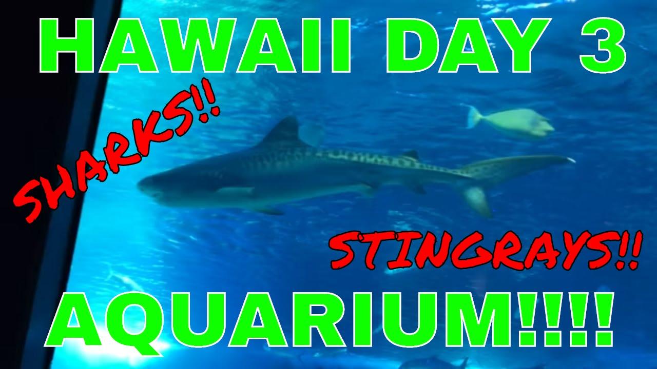 HAWAII DAY 3 - MAUI AQUARIUM!!! - SHARKS, STINGRAYS, SQUID ...