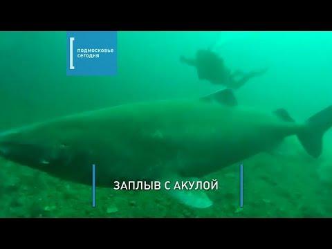 Дайвер из Подмосковья снял на видео гренландскую полярную акулу
