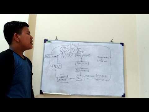 BioGeoKimia Daur Nitrogen (Naufal Alfarisi) SMAN 13