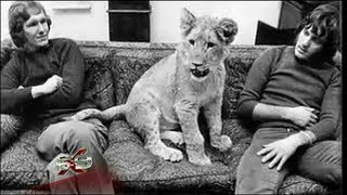 Gambar cover 16x9 - Wonderful story of Christian the Lion