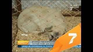 Первый частный приют для собак решено построить в Красноярске