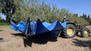 Récolte mécanique des amandes 2