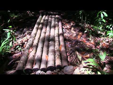 Palau  Micronesia Island Tour Part2 June V2 Paul Ranky HD Video