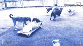 The Barking Zone - Obedience Training - Place With Distractions