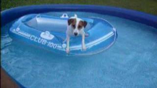Bandit the Dog Pool Patrol
