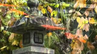 Relaxing music Mi jardín oriental