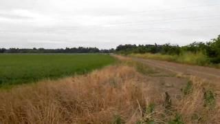 Watering Rice Field in Arkansas