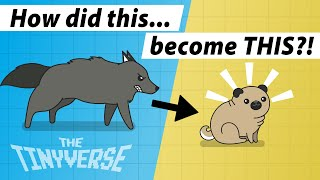 A Brief History of Dogs  How We Domesticated Dogs