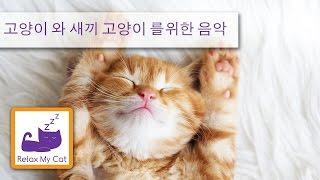 잠 고양이 편안한 음악