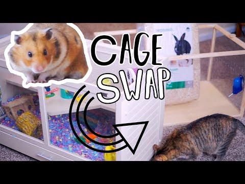Download - hamster cage theme video, hn ytb lv