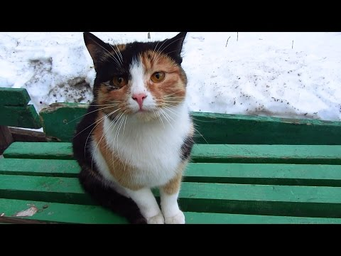 Hungry cat on bench