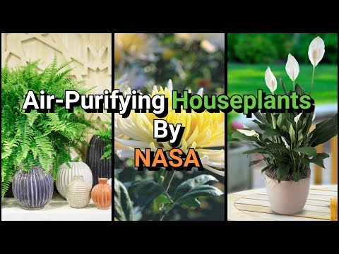 15 Best Air-Purifying Houseplants Recommended by NASA - YouTube Nasa Recommended Houseplants on