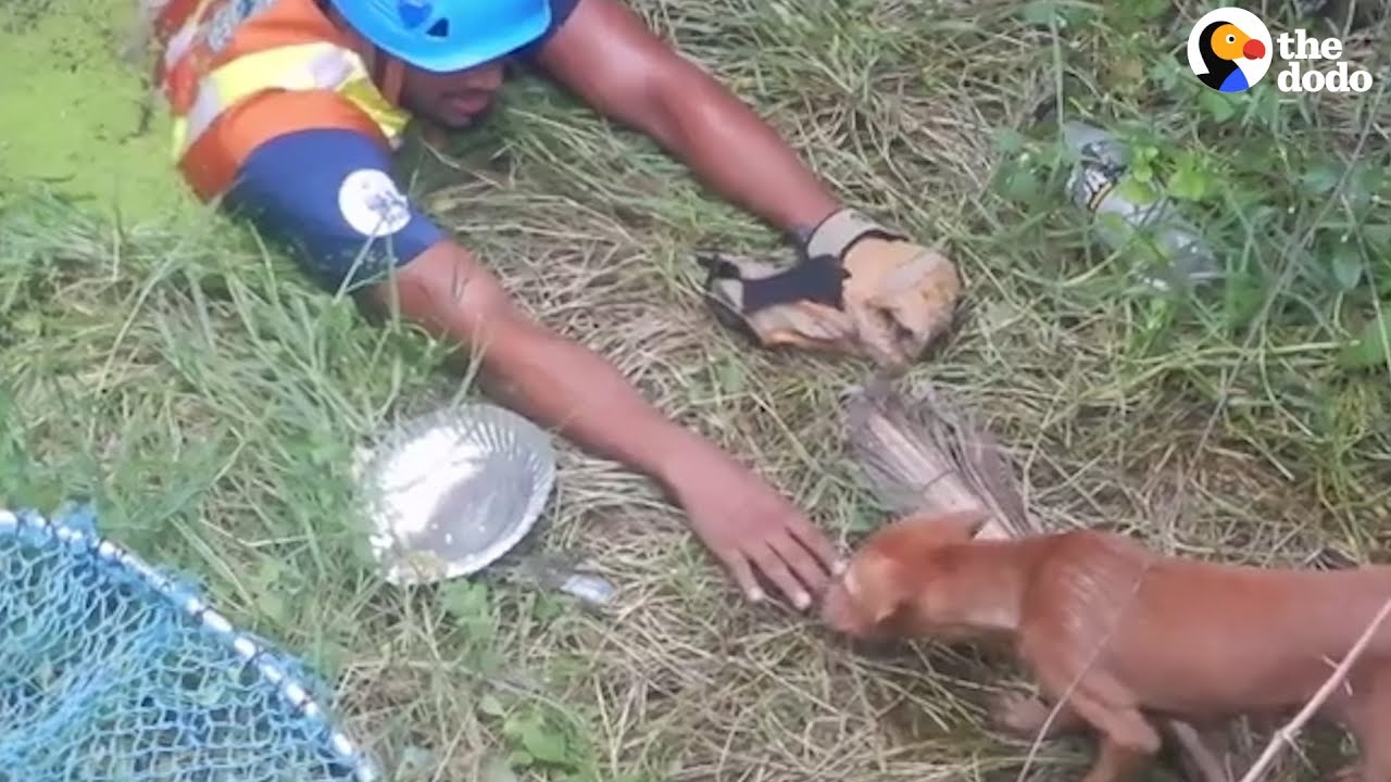 Guy Rappels Into Well To Rescue Stray Dog | The Dodo