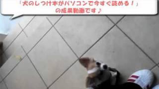犬のしつけホームページ→http://dog-life-bic.biz/book/ 犬のしつけには...