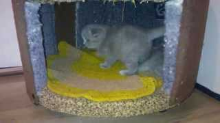 Котята в домике