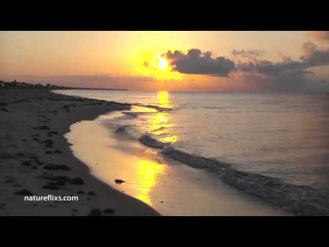 Coast of Marseilles - Jimmy Buffett
