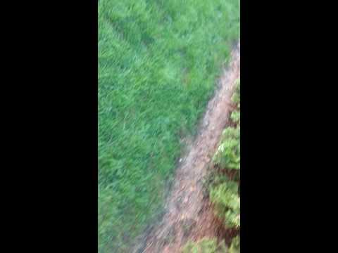 Pennington Grass One Step results