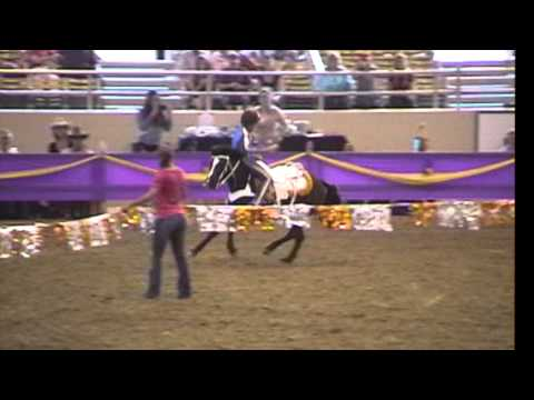 Griffith Trick Riding at the Fiesta of the Spanish Horse  2014