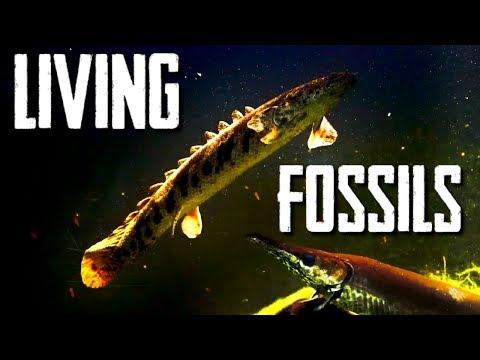 Ancient Aquarium Fish - Bichirs With Rachel O'Leary