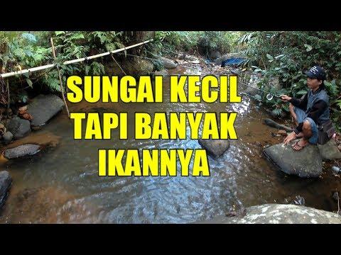 Mancing di Sungai Kecil Pakai Umpan Cacing