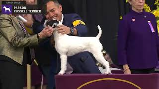 Parson Russell Terriers | Breed Judging 2020