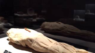 Mummies of the World at Orlando Science Center
