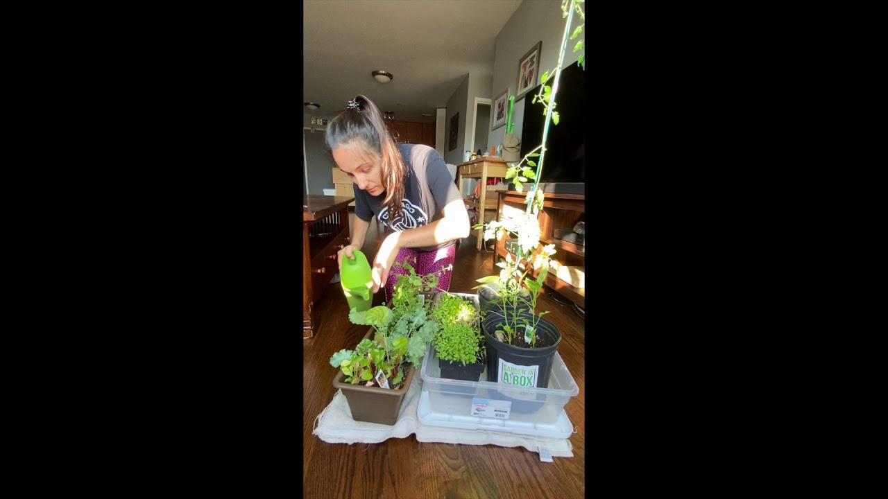 REACH Garden-in-a-Box Tutorial #2