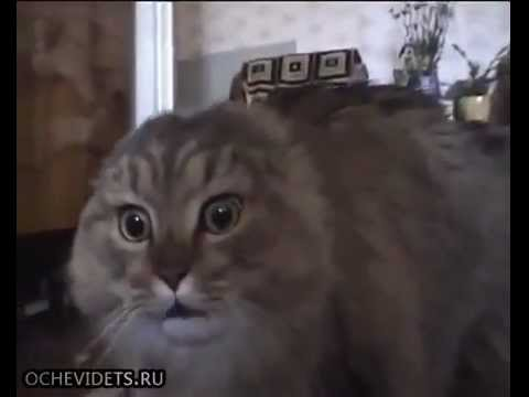 Поющий кот онлайн