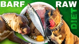 BARF Raw Diet To Build Muscle For American Bully Dog XL Pitbull And Large Breeds