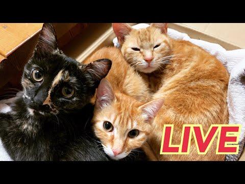 第5回ウズネネライブ【LIVE】【Uzu & Nene channel 】ウズネネチャンネル