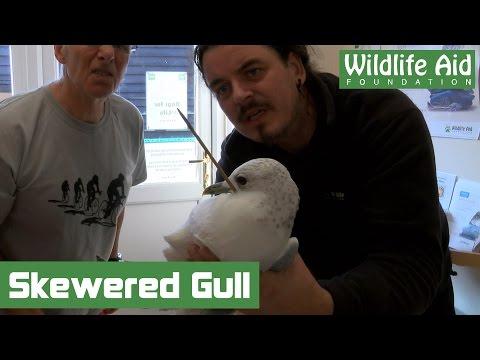 Gull impaled on skewer
