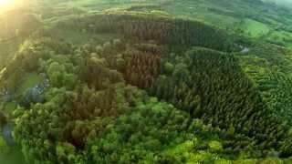 Spring Greens & Golden Glades